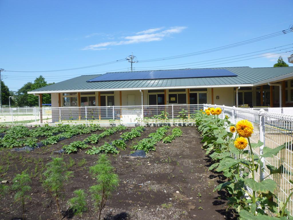 園の畑では野菜を収穫します